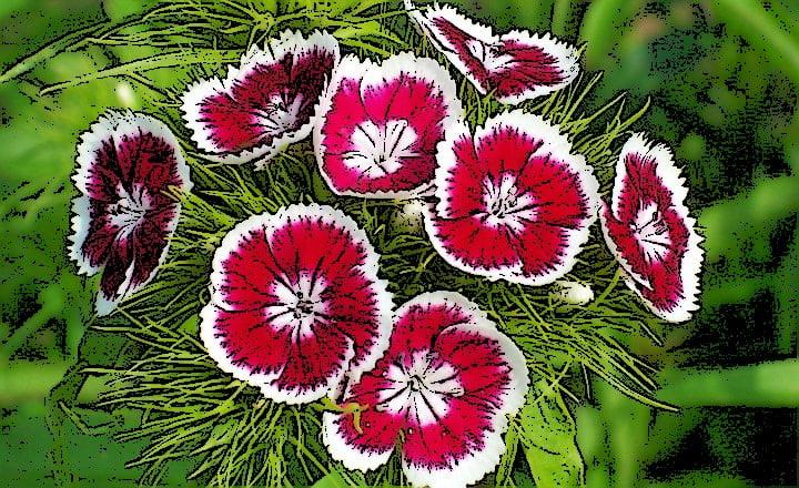 Qu es plantas ornamentales su definici n concepto y for 5 nombres de plantas ornamentales