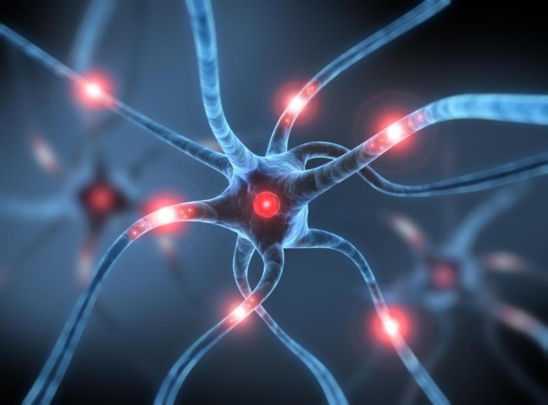 Neurona sistema nervioso