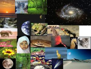 Ciencia Naturales C