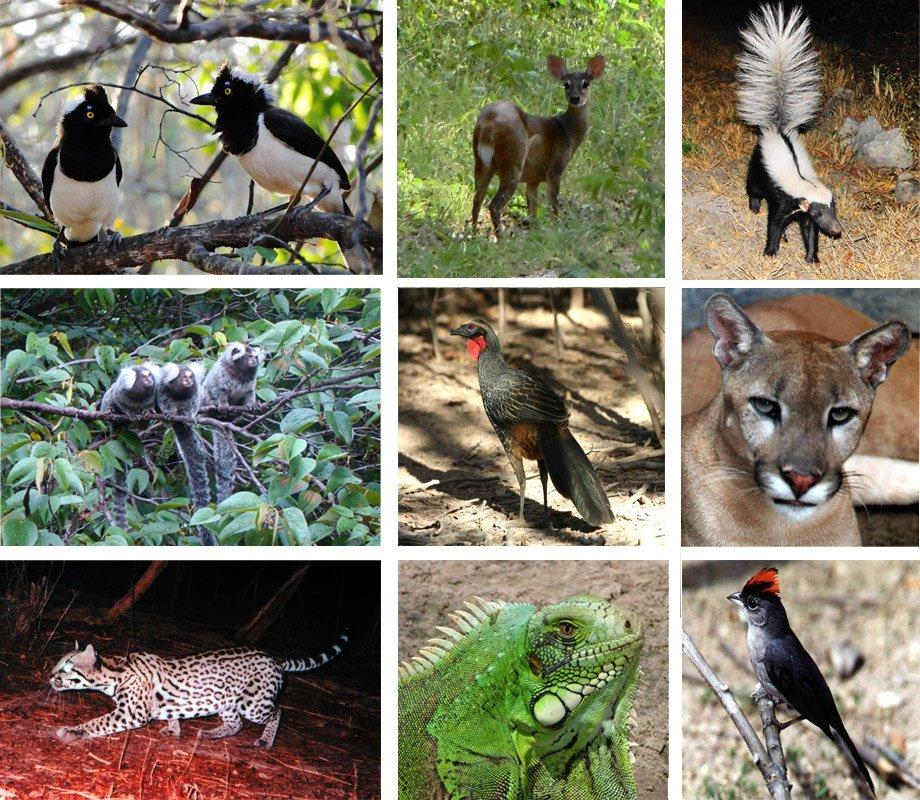 Fauna Ciencias Naturales