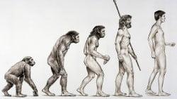 Biología Evolutiva evolucion