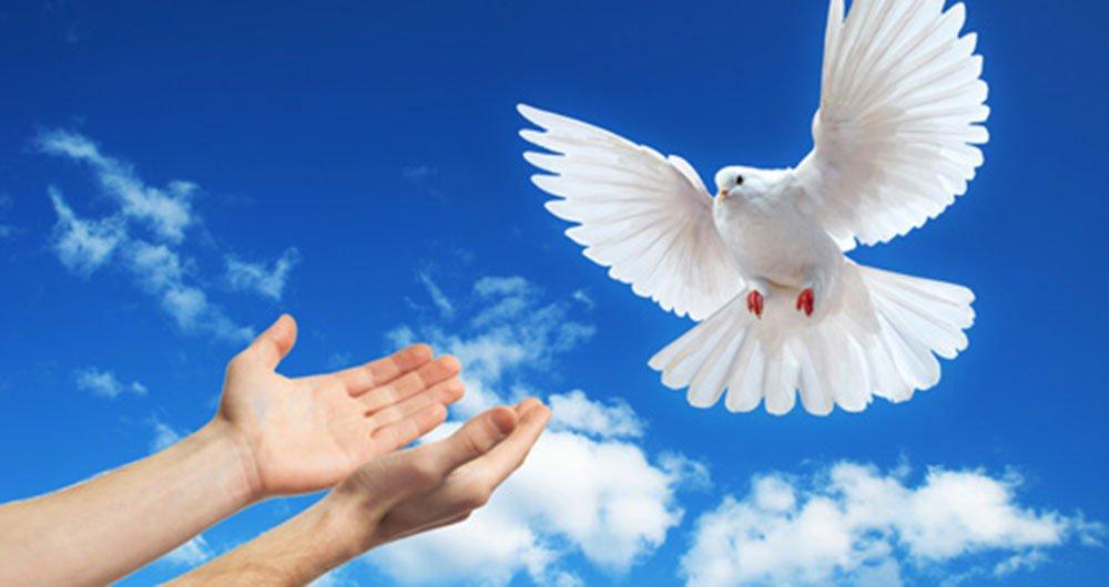 Paz equilibrio