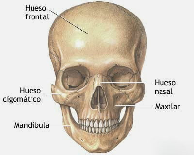 Hueso Frontal cráneo