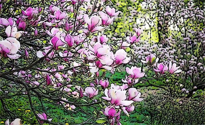 Flor_de_Saron