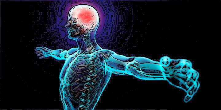 sistema_nervioso