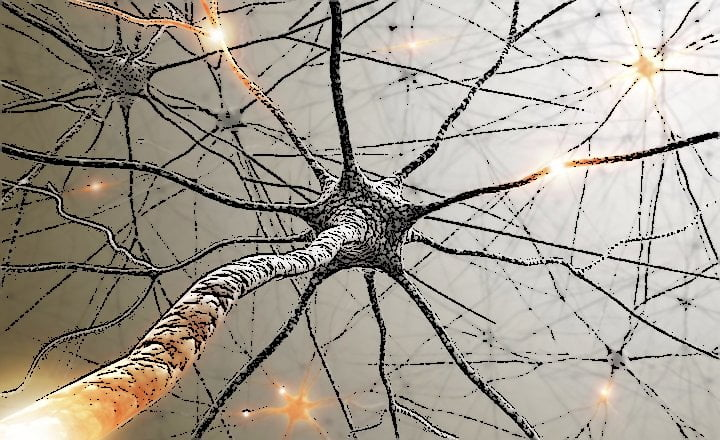 Sistema nervioso médula espinal