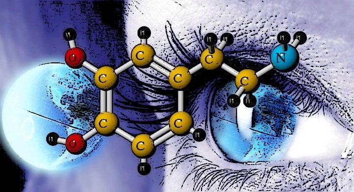 Dopamina memoria