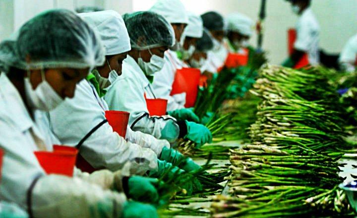 Agroindustria siembra