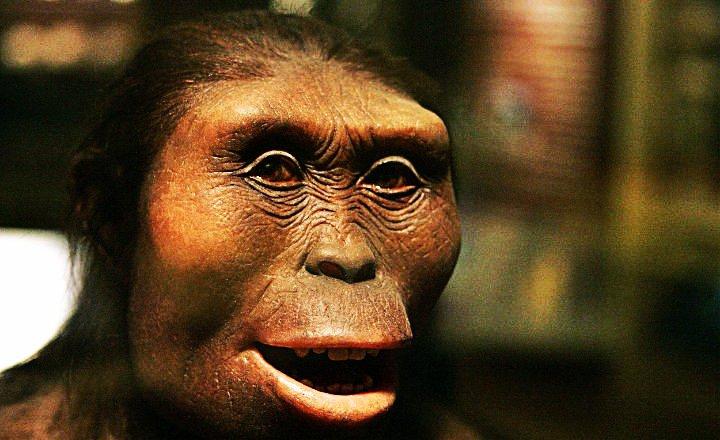 Australopithecus Ciencias Formales