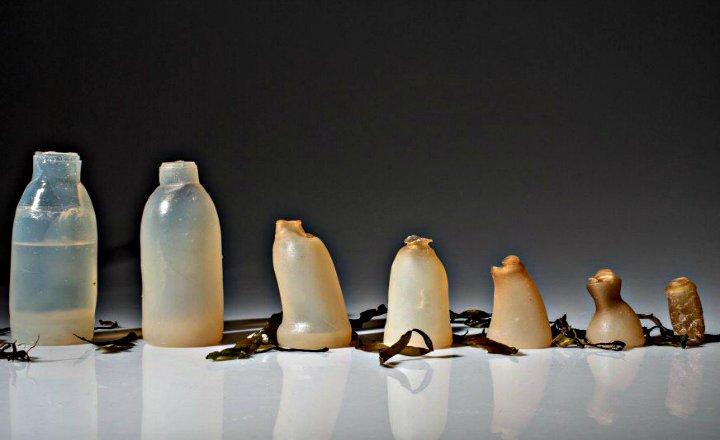 Biodegradación bacterias