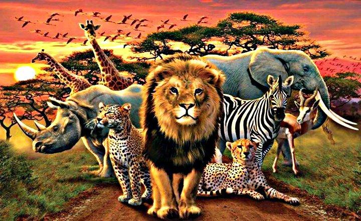 Taxonomía animal