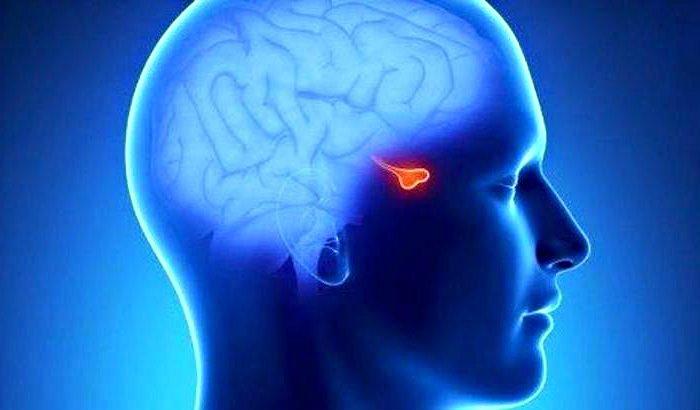 Glándula Pituitaria • Definición y Qué es 2020