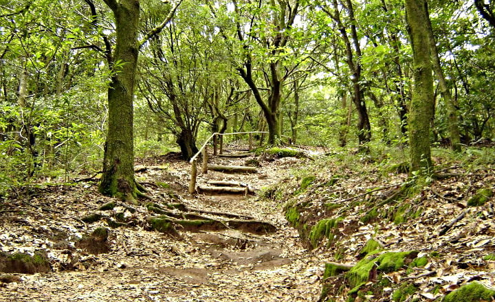 Reserva Forestal estado