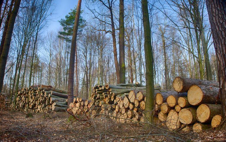 Recursos Forestales R