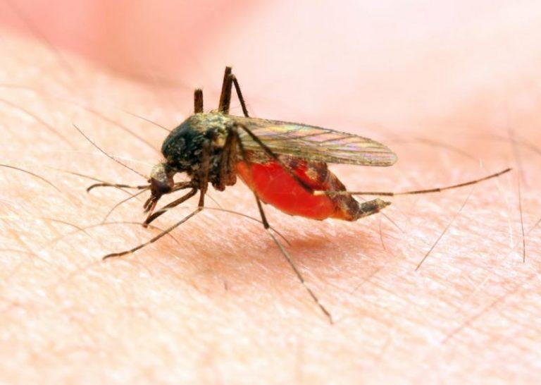 Malaria picadura